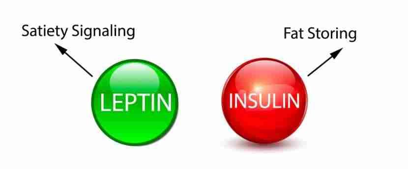 Insulin-and-Leptin