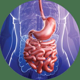 GI Tract 2018 Detox Program