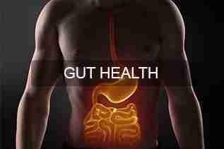 Gut-Health-South-Australia